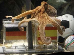 Paul the prognosticating Octopus