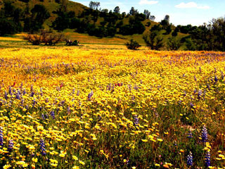 Wildflower Century: wildflowers!