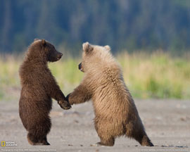 bears holding hands...