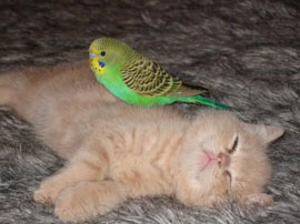 kitten and bird... awww...