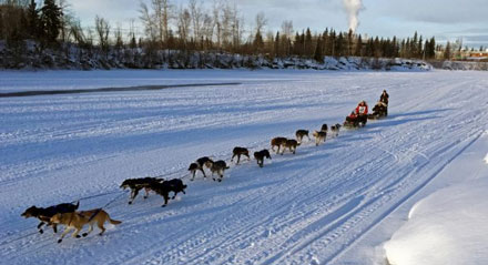 Yukon Quest 2016 leader Hugh Neff and team