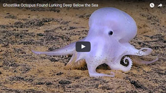Deep sea Octopus ... Casper?