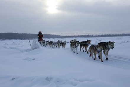 Aliy Zirkle and her beautiful team out on the Yukon River