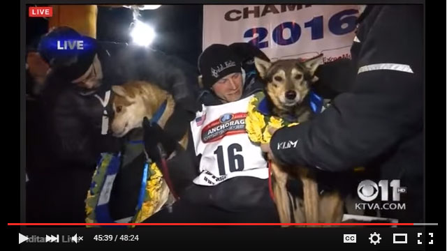 Dallas Seavey and his leaders, top dogs of the 2016 Iditarod. Click to play video of live finish...