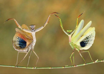 the dance of the insects