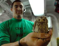 baby owl found in fighter jet